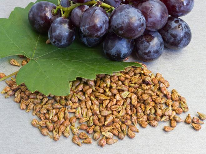 Trong hạt nho chứa hợp chất tannin, phlobaphene, lecithin